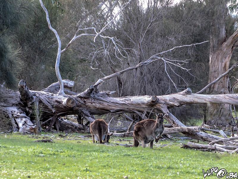 Australia-415.jpg