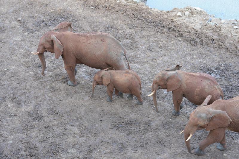East Africa Safari 66.jpg