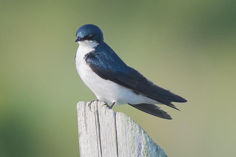 19-Sept North America Birds-4348.JPG
