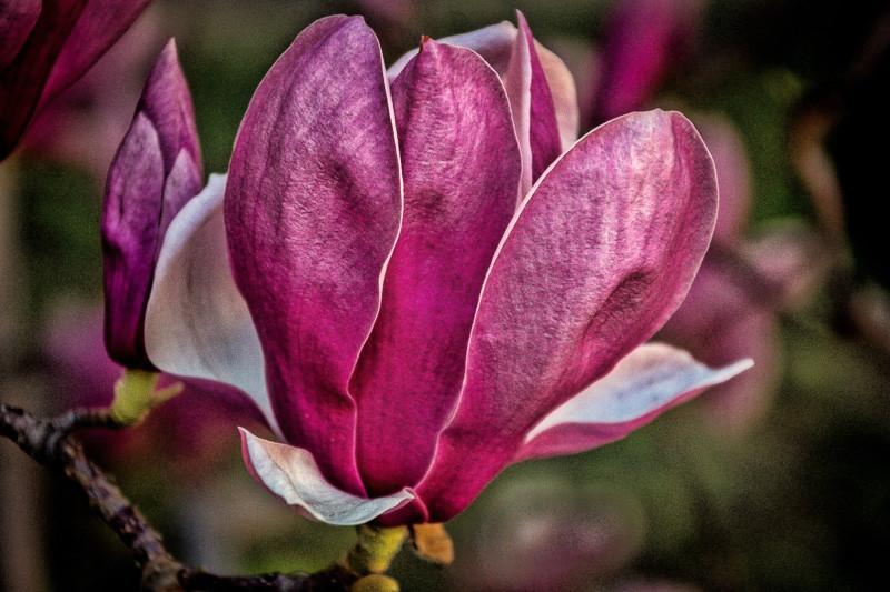 feb 26 - flower.jpg