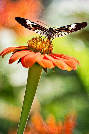 Butterfly World - 5/7/11