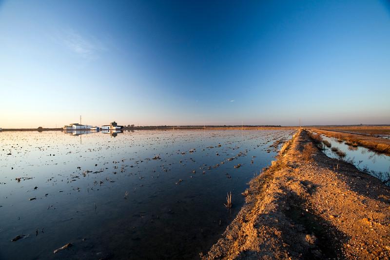 Harvested rice field, Doñana marshland area, town of Isla Mayor, province of Seville, autonomous community of Andalusia, southwestern Spain