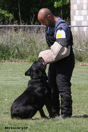 DFW Working Dogs Trial Day One April 15 - 16