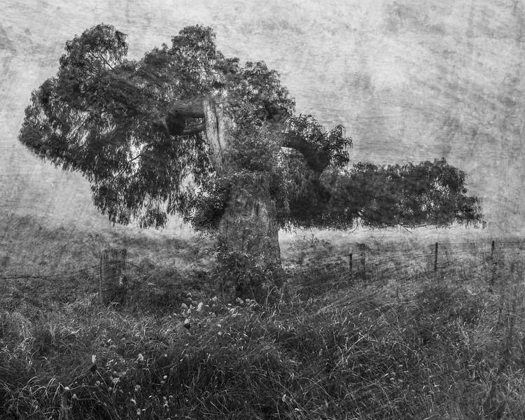 The Faraway Tree.tif