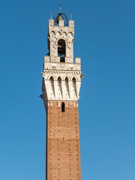 Siena Torre