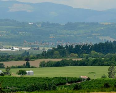Oregon Wine Country, Newberg, Oregon