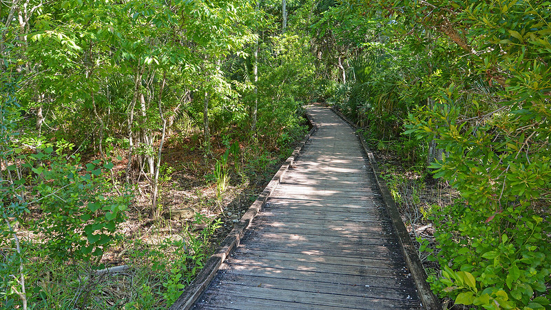 Boardwalk into forest