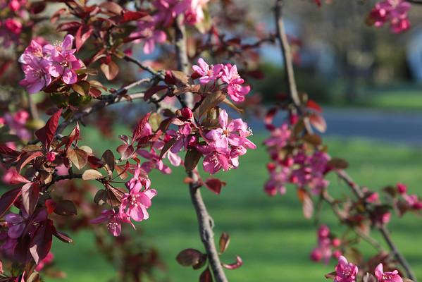 Solon Spring 2012