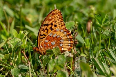 2020 05 Butterfly