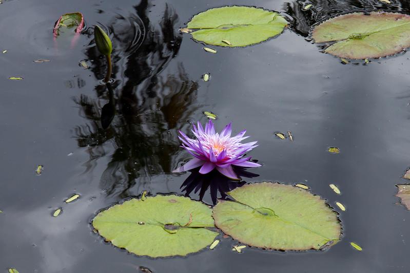 nanaples_botanical_garden_0022-LR.jpg