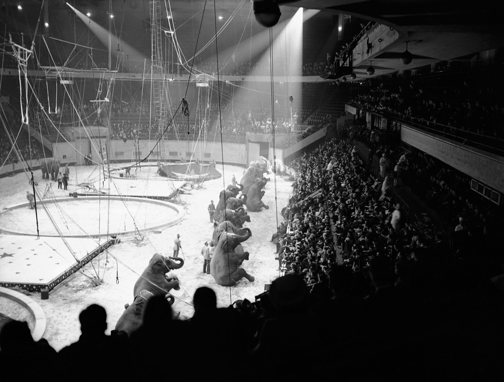 ". Opening night performance of the ""Greatest Show on Earth\"" in New York\'s Madison Square Garden on April 5, 1939. The patrons witnessed the elephant troupe going through their regular paces as the Ringling Brothers Barnum and Bailey Circus opened its 1939 season. (AP Photo)"