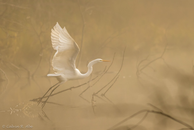 Egret in the American River-Foggy.jpg