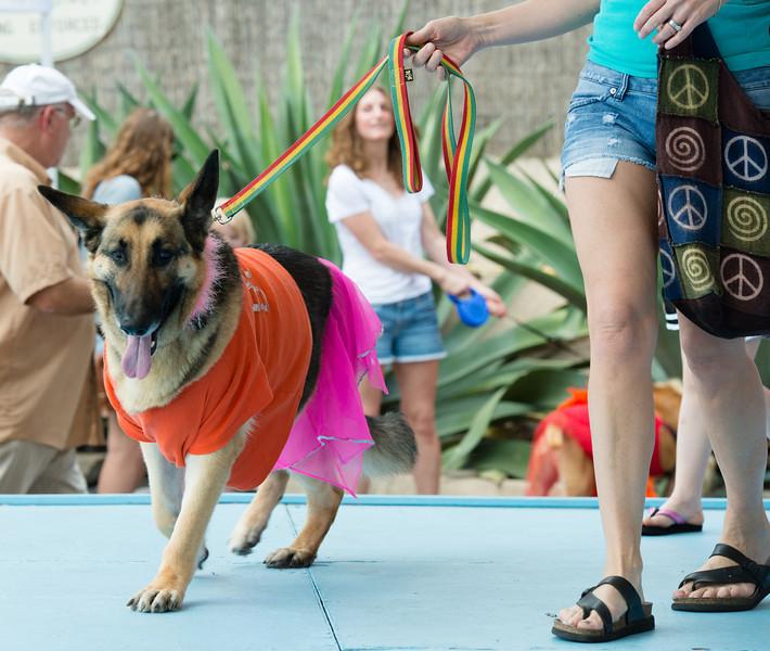 12-04-07_12-31-58__8001083_2012_Pet.jpg