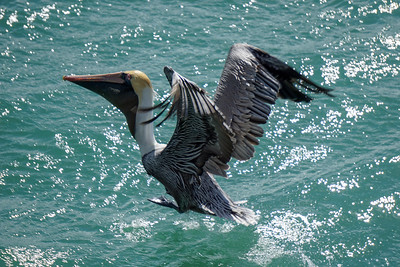 10 Florida Locations Perfect for Viewing Wildlife