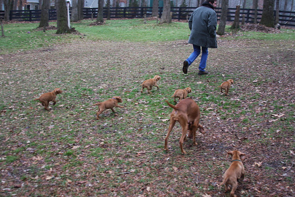 Hamilton Pups