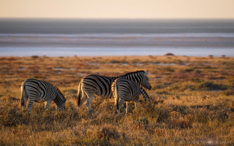 Zebras overlooking the huge salt pan at Etosha National Park, Namibia.