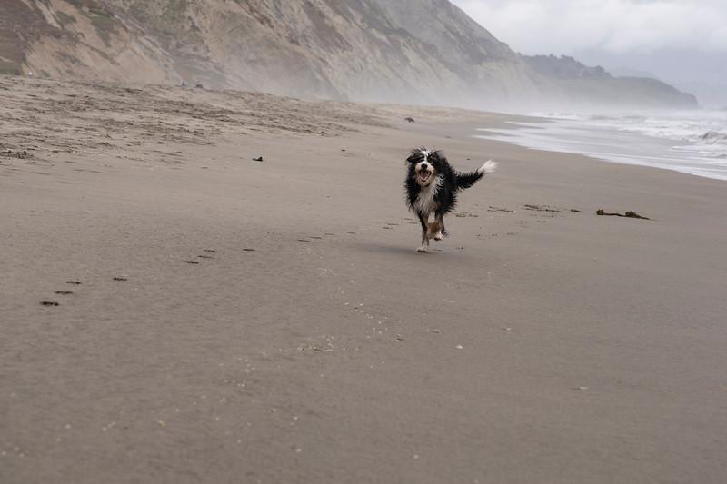 ocean beach quarantine 1224095-30-20.jpg