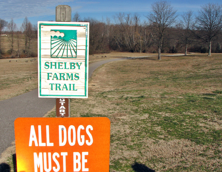 Unlike Mud Island, Shelby Farms was open, and so were the walking trails. We walk.