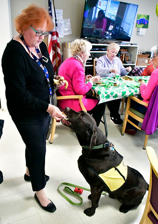 4/9/2019 Mike Orazzi | Staff Countryside Manor of Bristol volunteer Sharon Louchen feeds her dog Quinn a banana during an appreciation luncheon held on Tuesday afternoon.