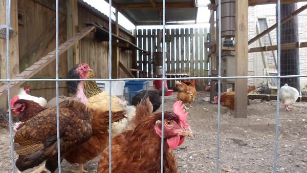 Taylor 2/10/17 - Kyler, Chickens, Selfies