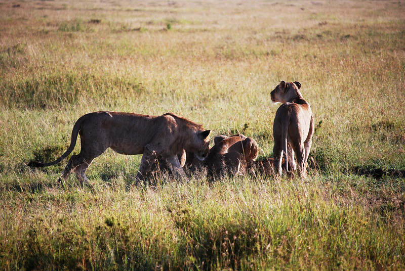 Serengeti (99).JPG