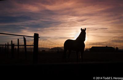 2013 March Colo/New Mexico/Arizona