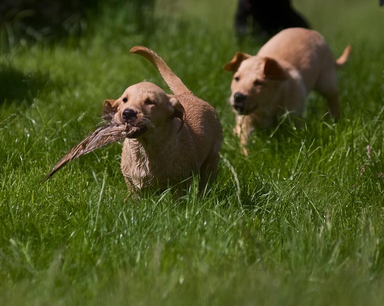 Puppies 802.jpg