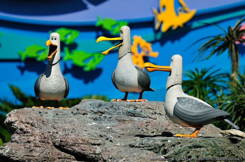 Seagulls at Finding Nemo - EPCOT