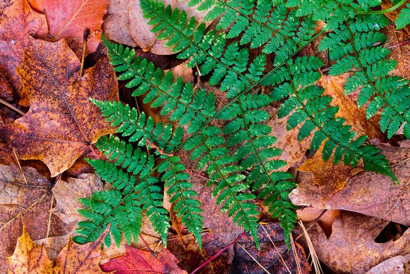 late fern_Nov 1-10_03.jpg