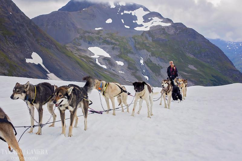 DogSledding2-9-2.jpg