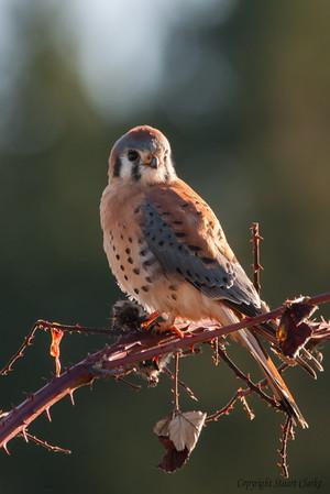 Best of Birds 2012