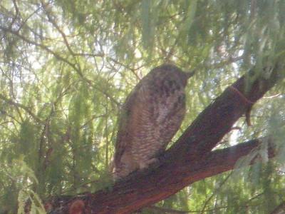 Owl at Job today 12-05-10