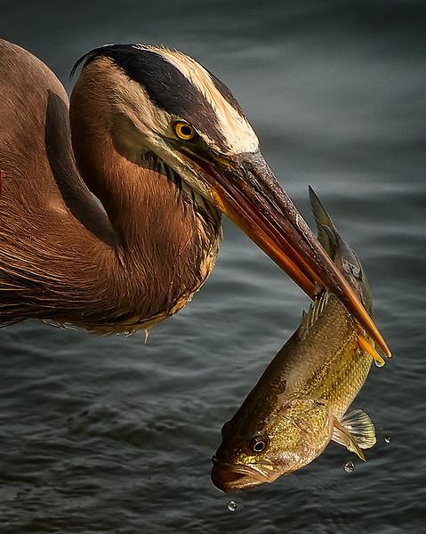 Birdlife_8x10.jpg