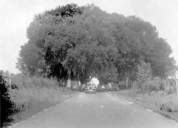 1928-Waycross Road-Pickettville.jpg