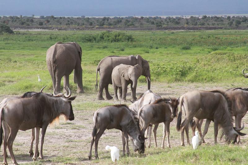 Kenya 2019 #2 2072.JPG