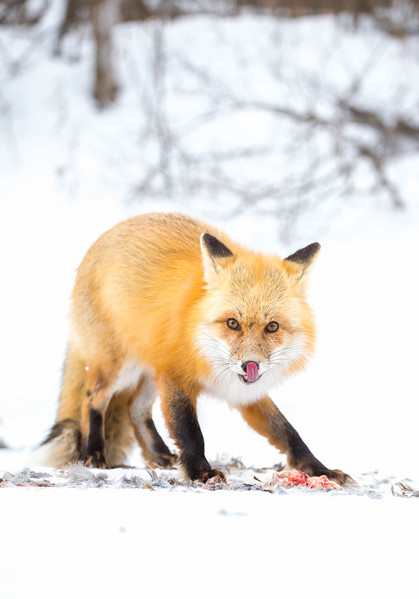 Red Fox Narrows Road 2.jpg