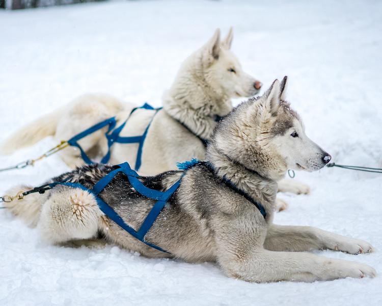 Dogsledding Good Times Day-1.jpg