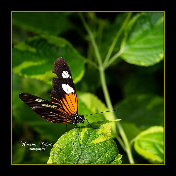 sm Orange Black Butterfly bottom left third 2.jpg