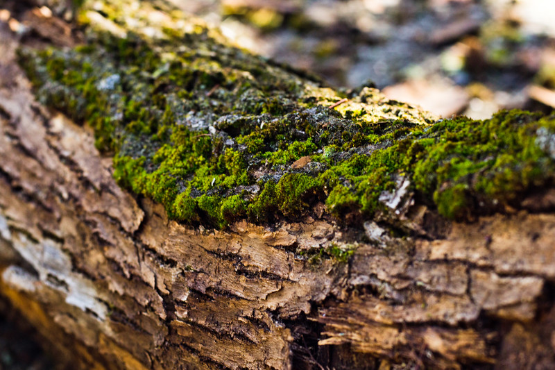 Moss on the Tree 22