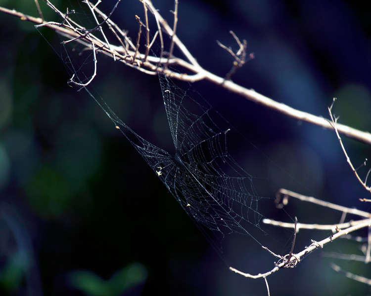 An unoccupied spider web in a tree