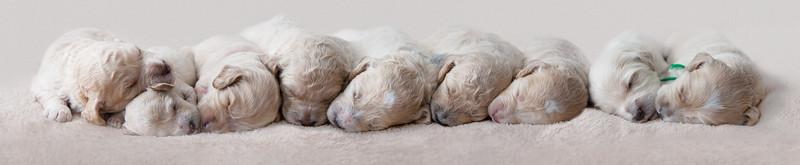 Boo's pups
