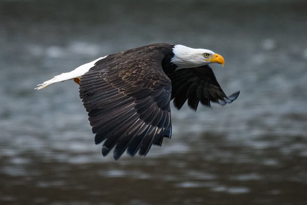 Bird Photography of North America
