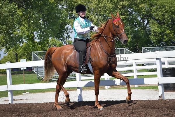35B. Academy Horsemanship 11-17 Yrs.