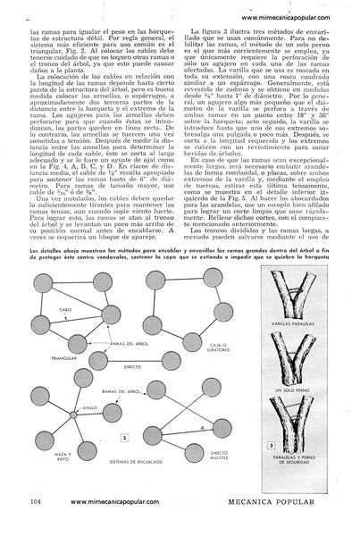 metodos_para_proteger_arboles_viejos_octubre_1952-02g.jpg
