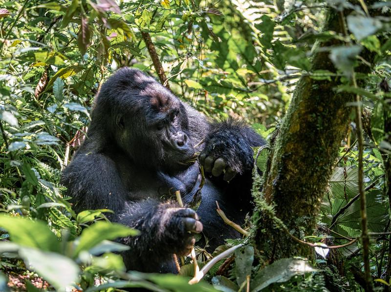 Uganda_T_Gor-206.jpg