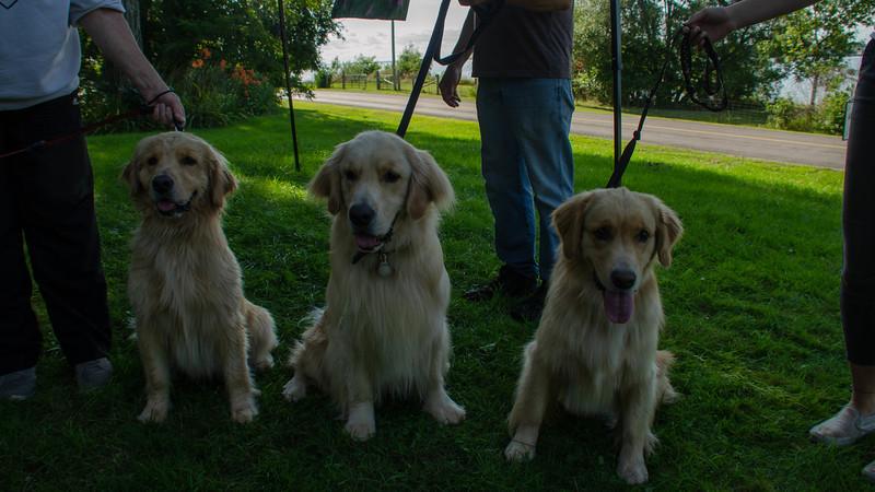 PuppyParty18-586.jpg