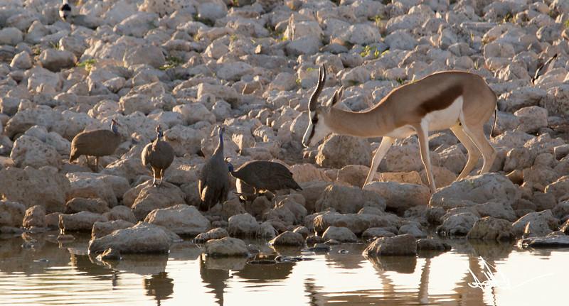 AntelopeS-3.jpg