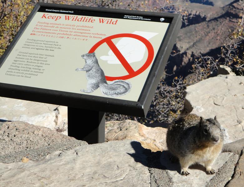 Grand Canyon-NPS '10 032.jpg