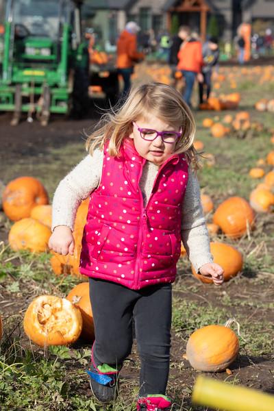 Laity Pumpkin Farm 2020