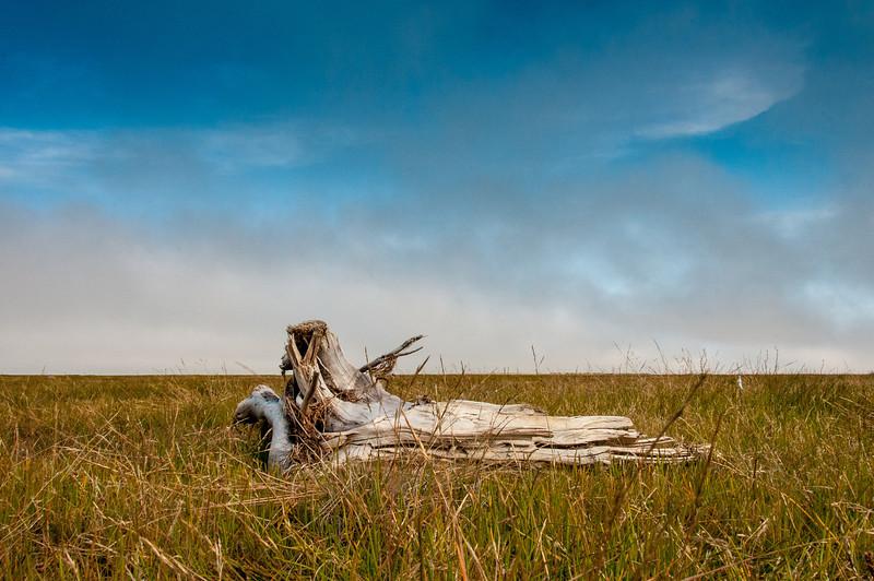 Dead branch near Hudson Bay, Manitoba, Canada